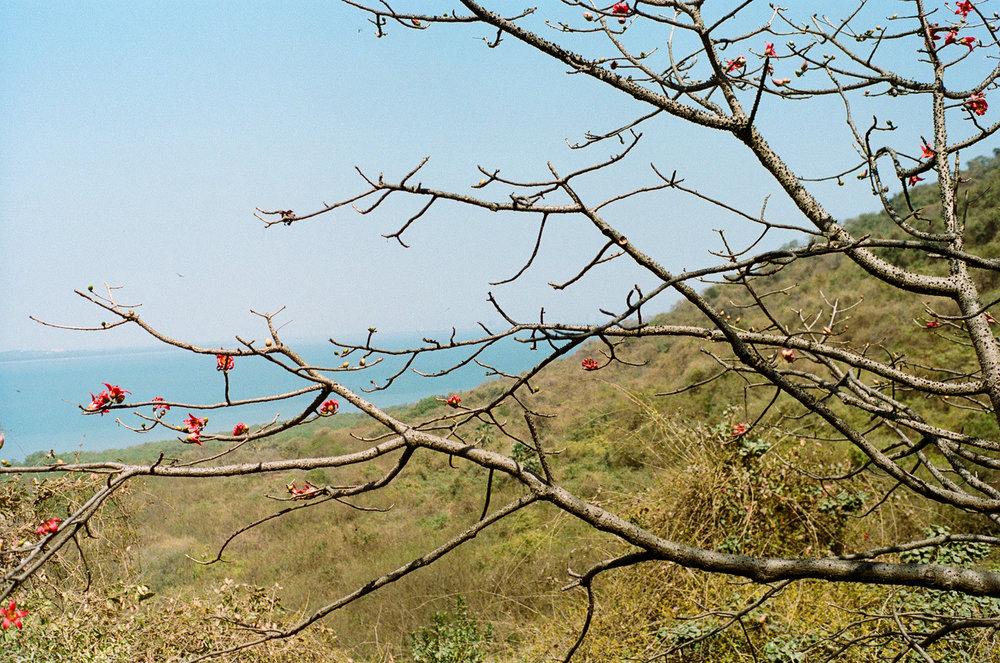 Elephanta Island Mumbai Bombay India Portra 400 Minolta X-700 (28 of 65).jpg