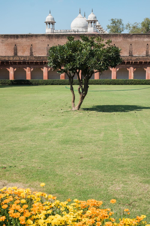 Agra India Travel Street Photography (26 of 39).jpg