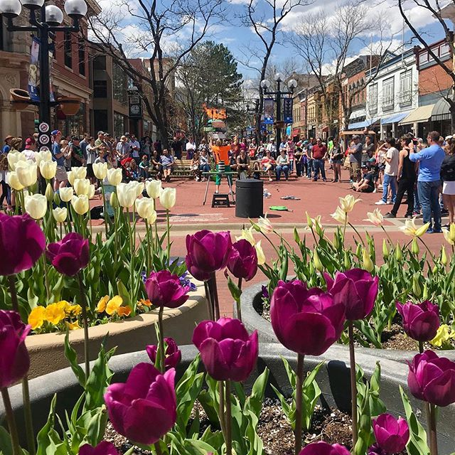 This weekend is off to a beautiful start! Even with snow on the ground, the warm sun has us thinking back to tulips on Pearl Street Mall. We love this shot by @loriaa4, taken last spring, featuring all our favorite things — talented street performers, historic architecture, unique shops, and people out enjoying the day. Pearl Street Mall is the best in any season. Happy weekend, everyone! Time to PLAY! #PLAYboulder