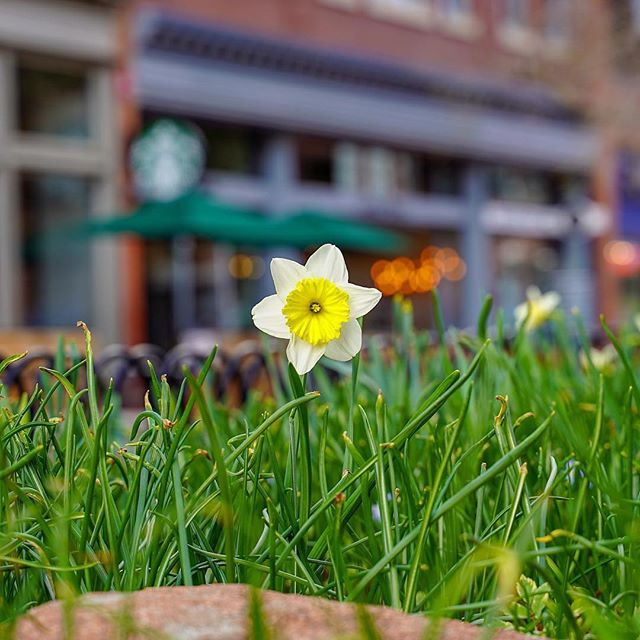 Spring is here, but get it while you can! We hear that Pearl Street Mall might look verrry different tomorrow. 😉 Thanks to @n.e.w.v.i.e.w for this fun capture! #snowiscoming #PLAYboulder