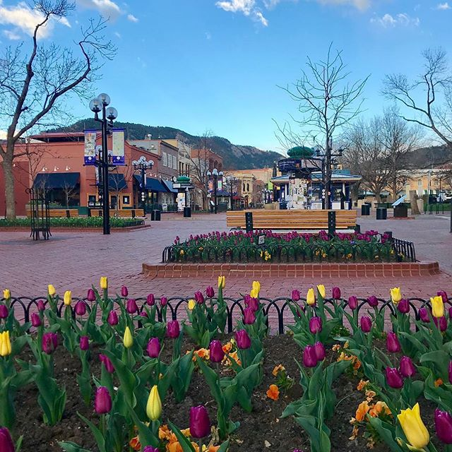 Have you been to Pearl Street Mall lately? The tulips are AHHH-mazing! 🌷🌷🌷 Thanks to @loriaa4 for this gorgeous photo. #PLAYboulder