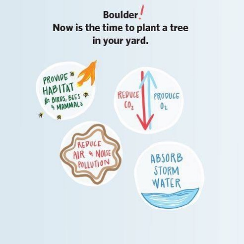There are still discounted trees available through the city sale! Get yours today! Http://bouldercolorado.gov/forestry/tree-sale #treetrust