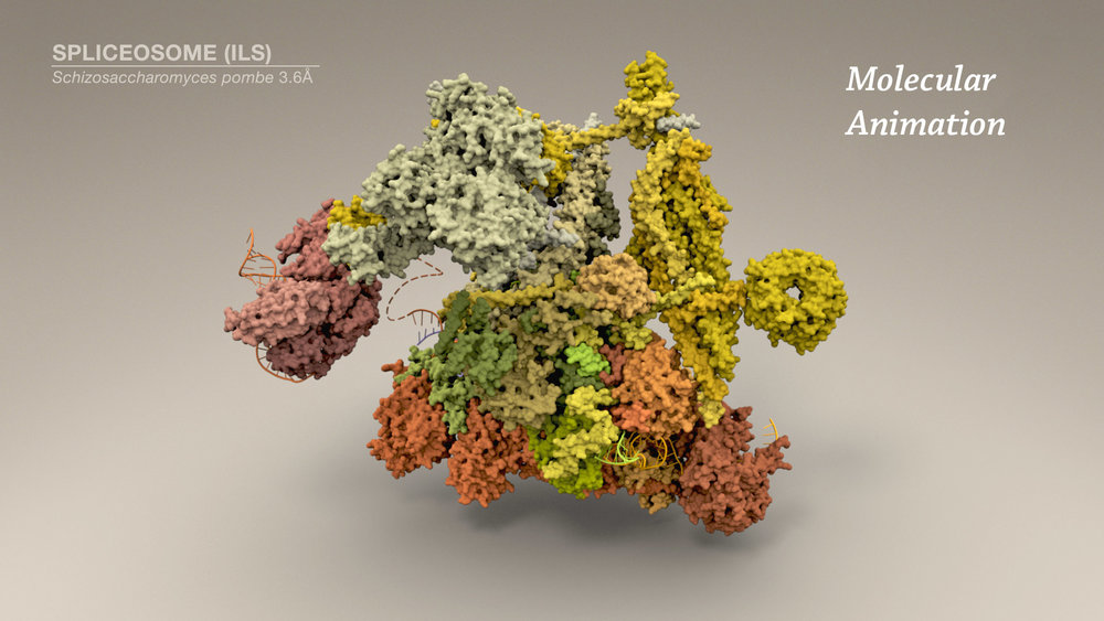 Molecular animations that explore the nano-world.