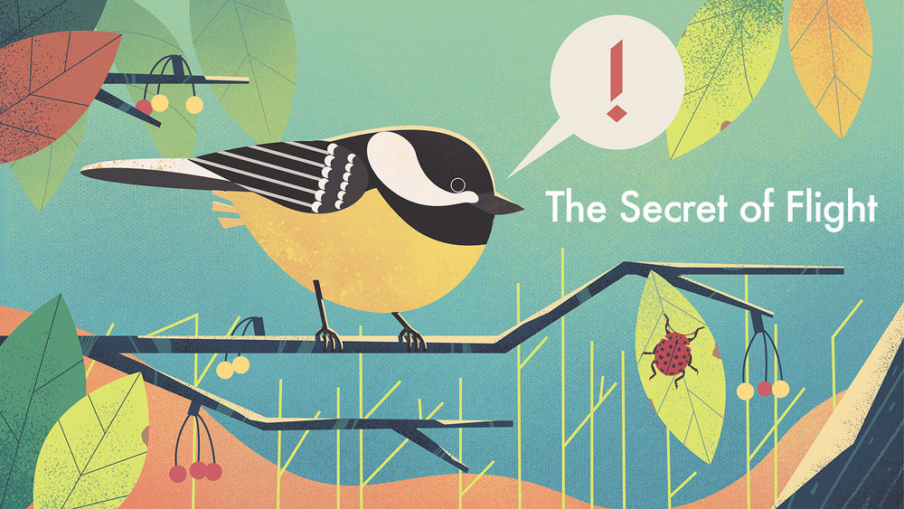 The Secret of Flight series includes 3 picture books about flying animals and aircrafts for kids of age 6-12.