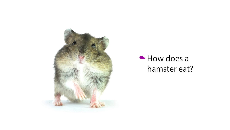 4 hamster.jpg