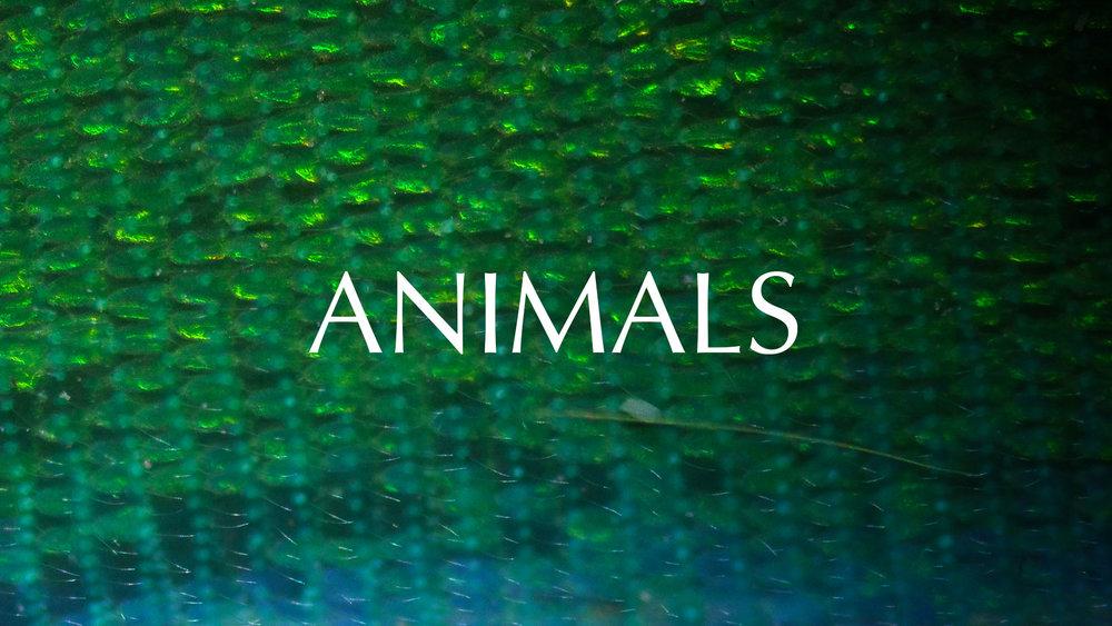 Animals-3.jpg