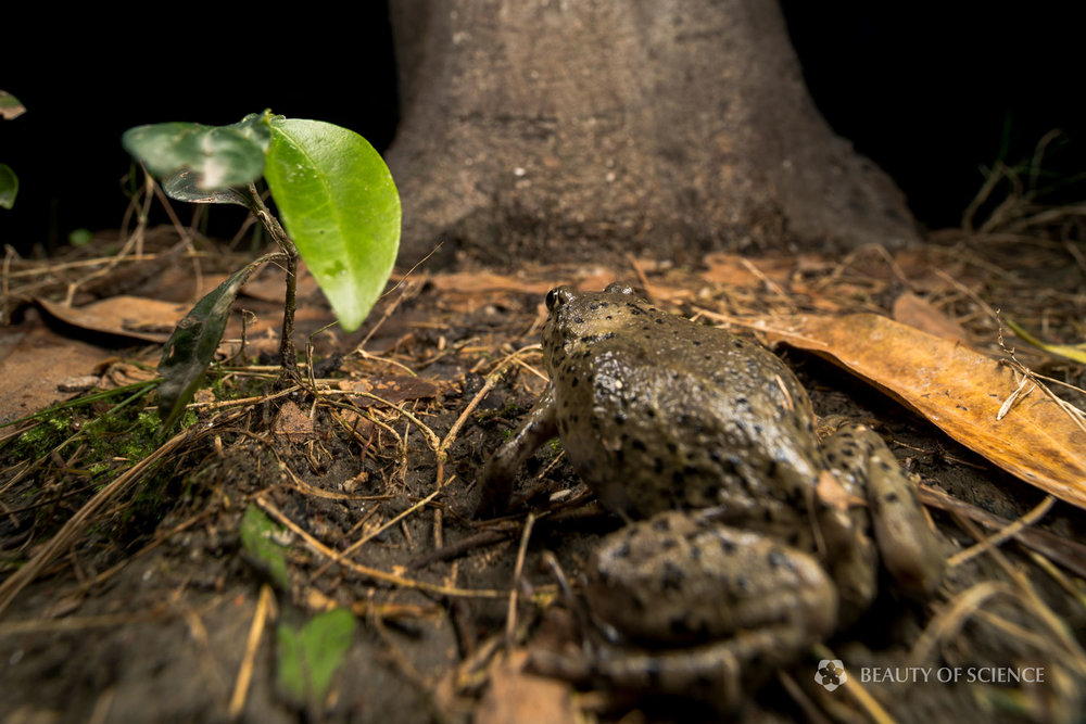 sichuan-narrow-mouthed-frog-habitat-08.jpg