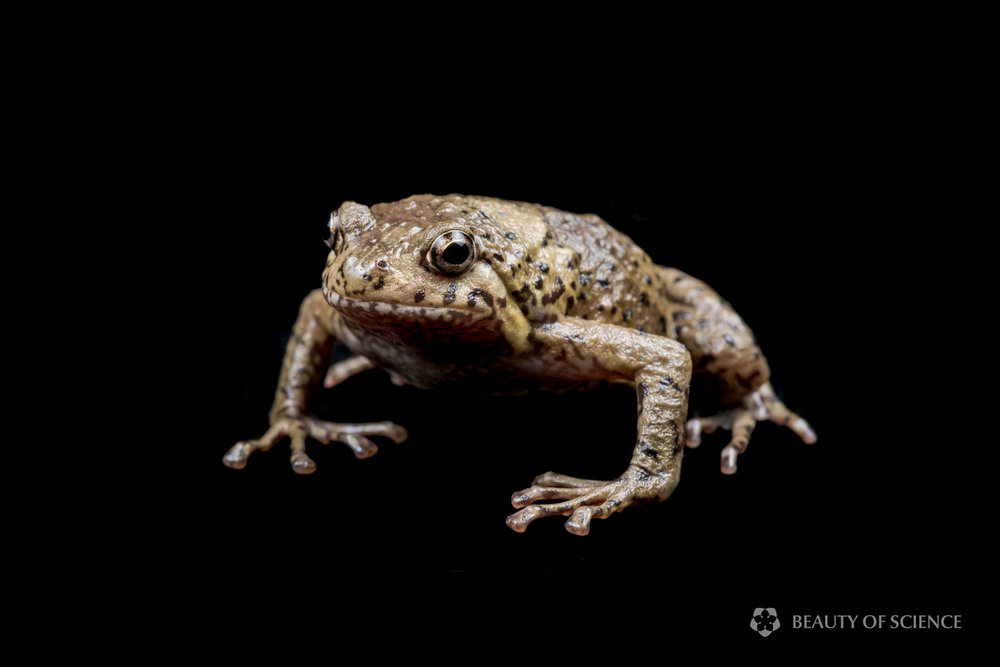 sichuan-narrow-mouthed-frog-art-05.jpg