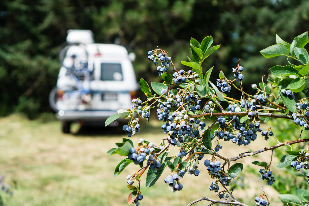 Blueberries and vans, two of our favorites