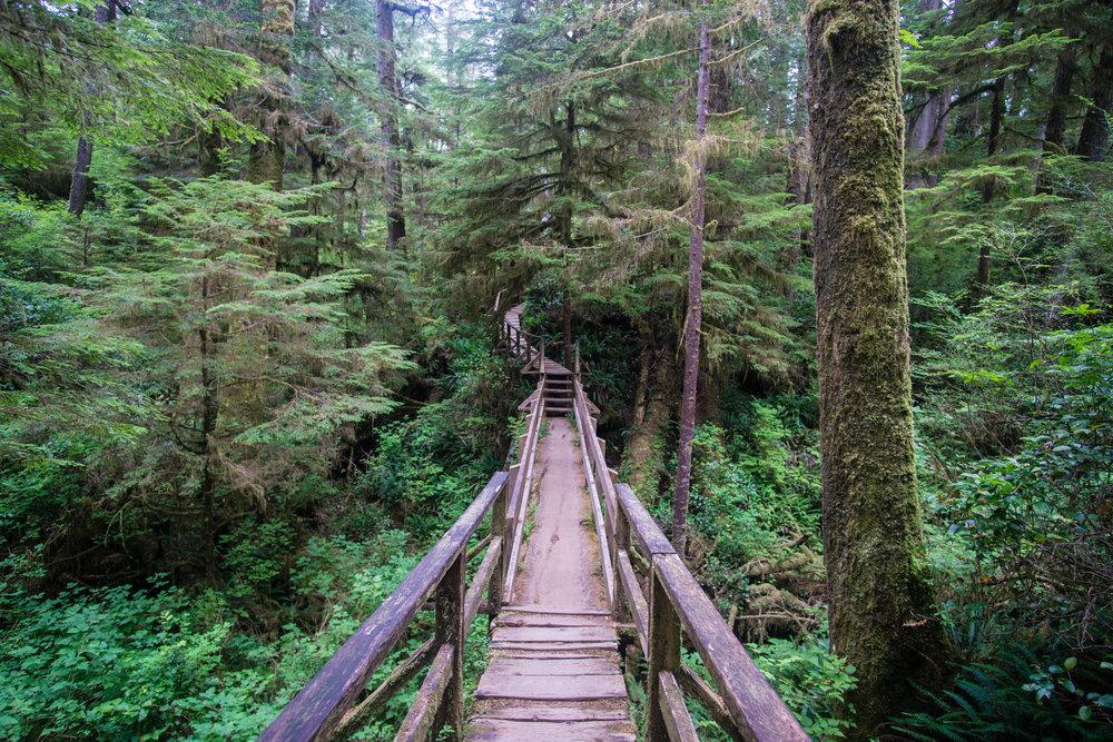 Rain forest ramblin'