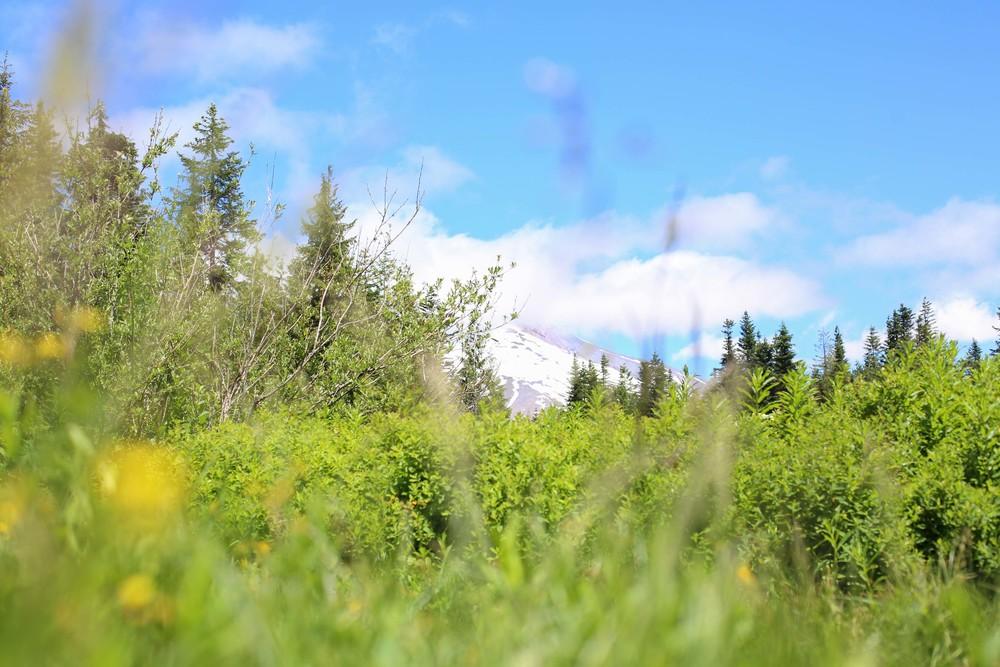 Lavendar Farm-75.jpg