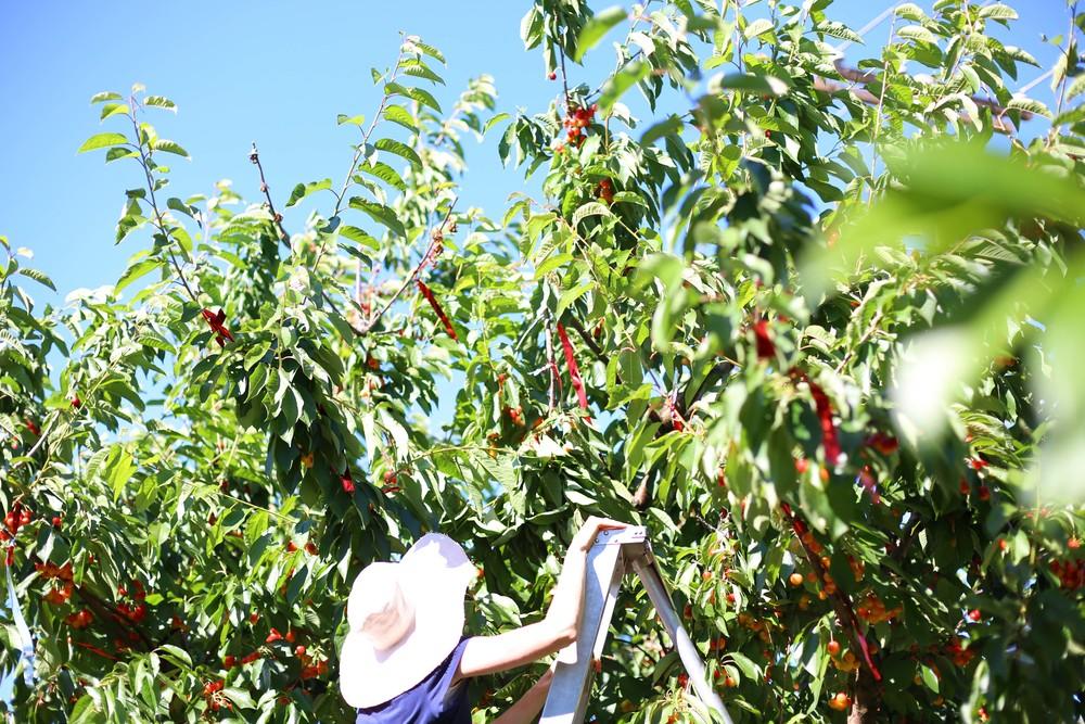 U-pick Farm-139.jpg