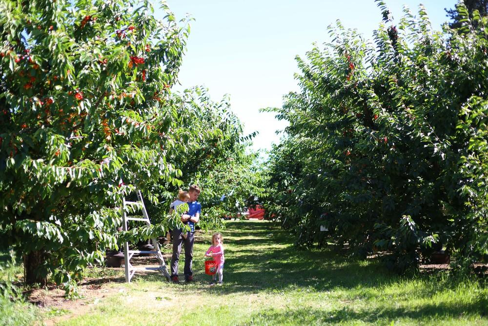 U-pick Farm-162.jpg