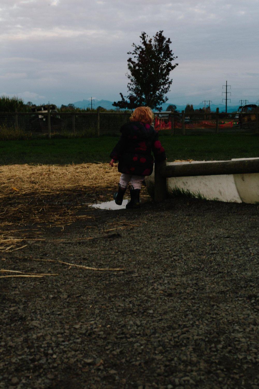 Swan's Trail-139.jpg