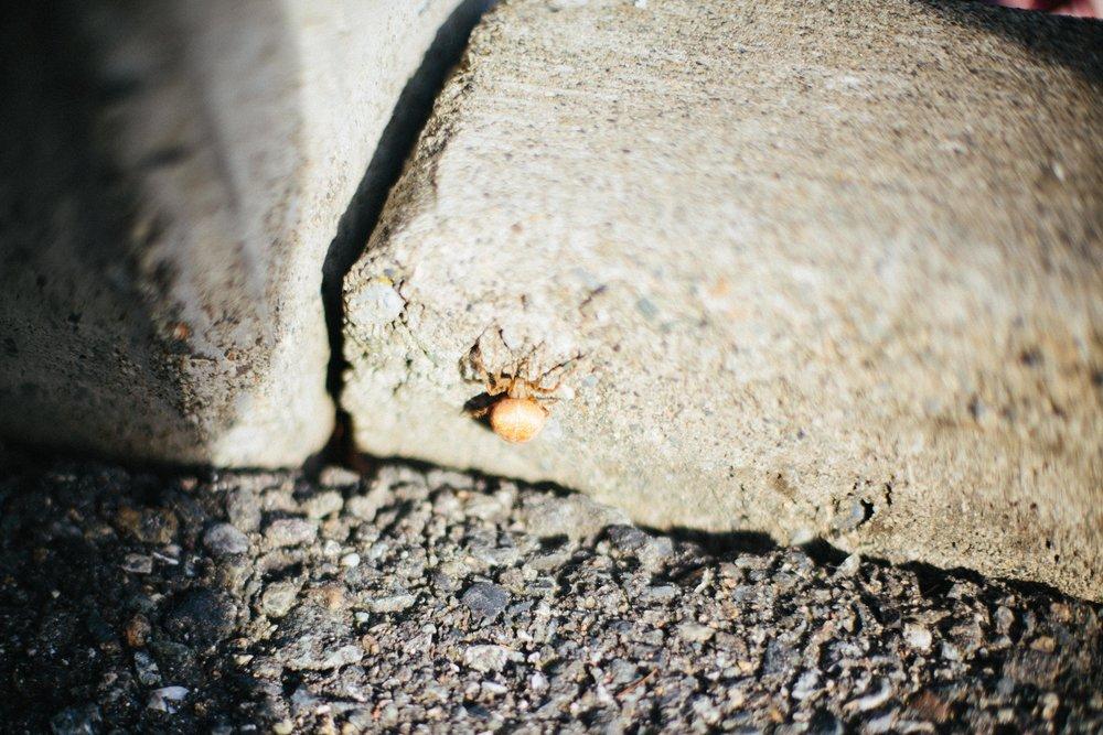Spider-186.jpg