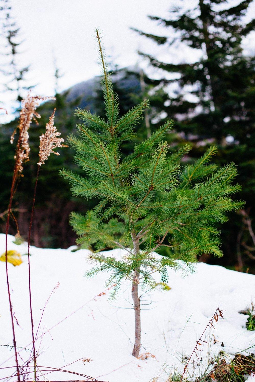 Christmas Tree Hunt-81.jpg