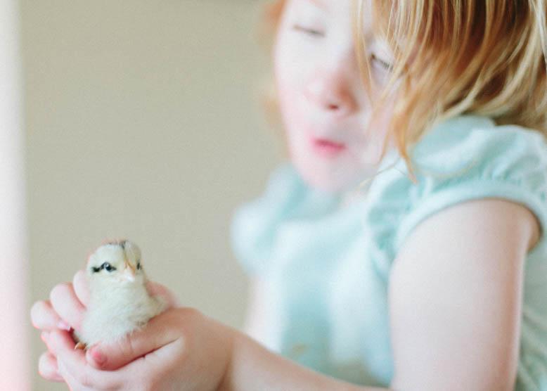 Baby Chicks-3.jpg