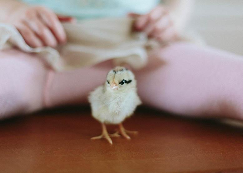 Baby Chicks-4.jpg