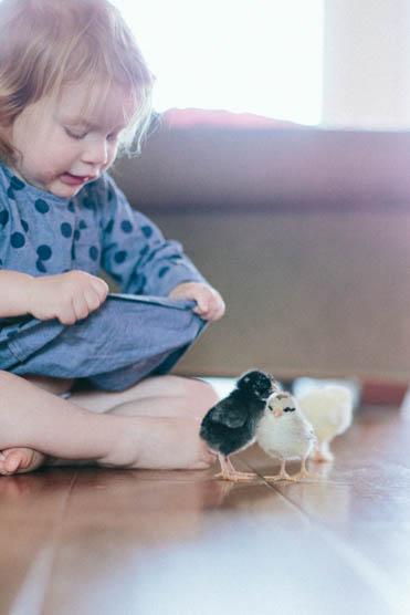 Baby Chicks-12.jpg