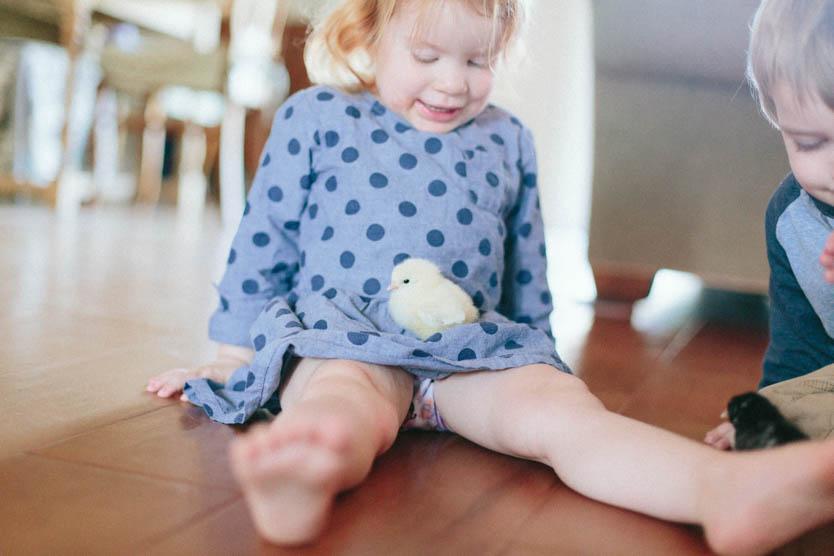 Baby Chicks-14.jpg
