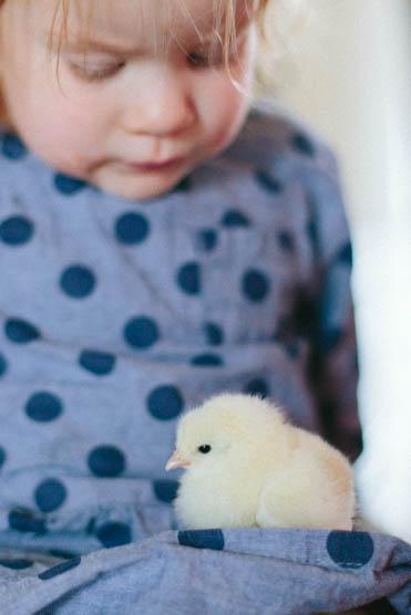 Baby Chicks-17.jpg