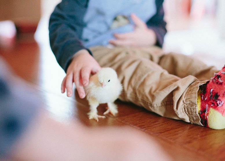 Baby Chicks-19.jpg