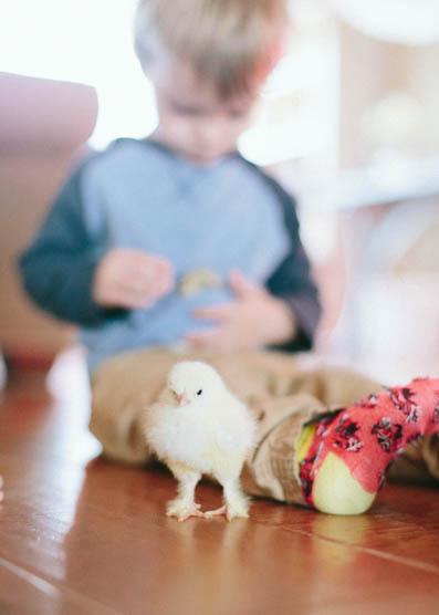 Baby Chicks-20.jpg