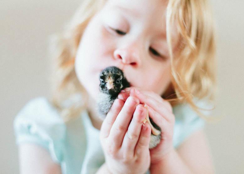 Baby Chicks-22.jpg