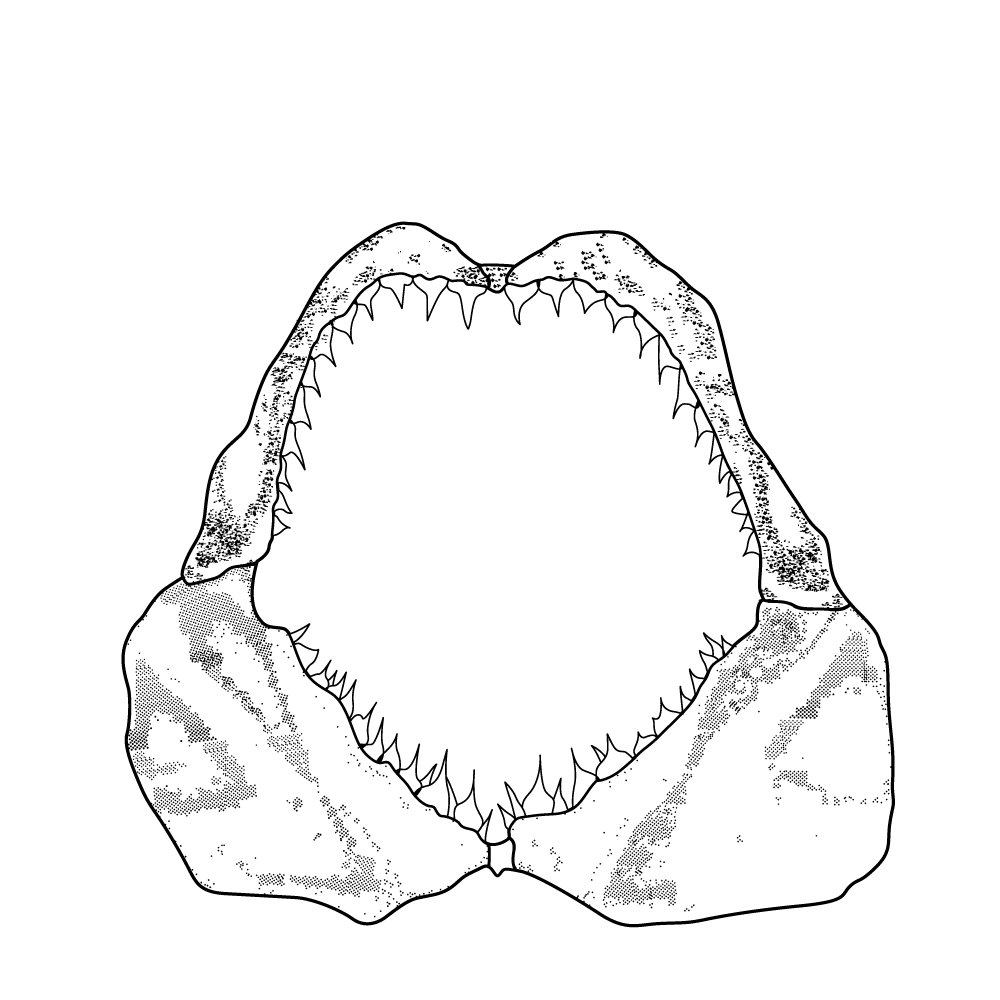 Montauk Hard Label