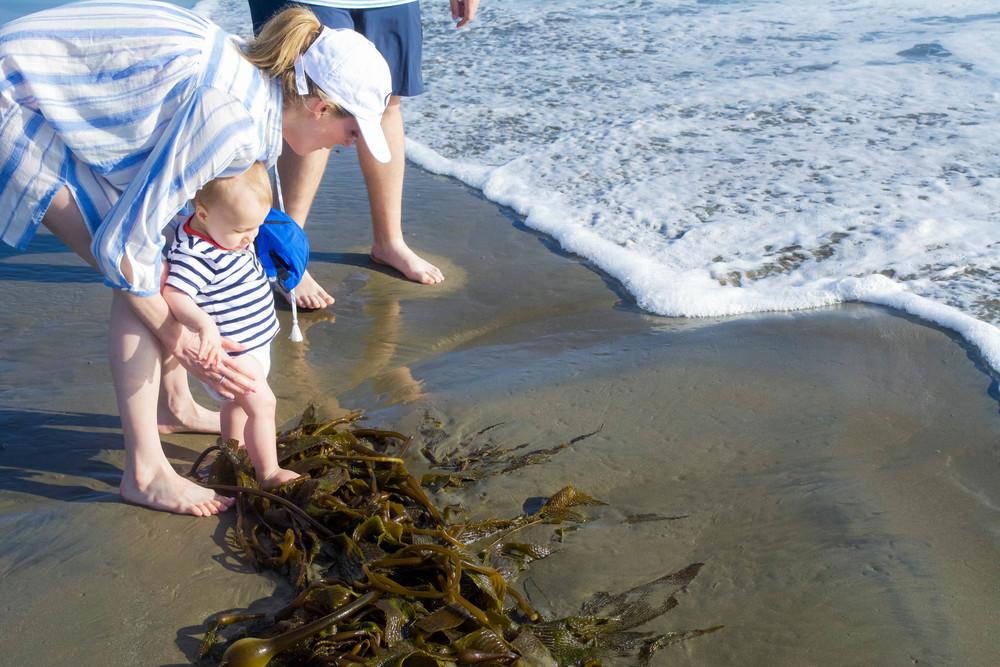 Discovering Kelp