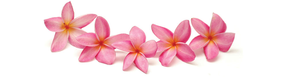 Pink-Flowers.png