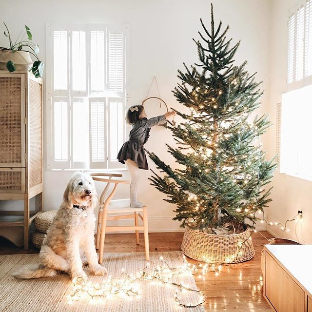 Christmas tree decorated 🎄✓ Presents wrapped 🎁✓ Okay, you deserve a break... Put your feet up before the craziness of Christmas begins with a nourishing treat the whole family will love, free of refined sugars and other nasties, like Kookas Natural cookies. 📷 @sylviatribel
