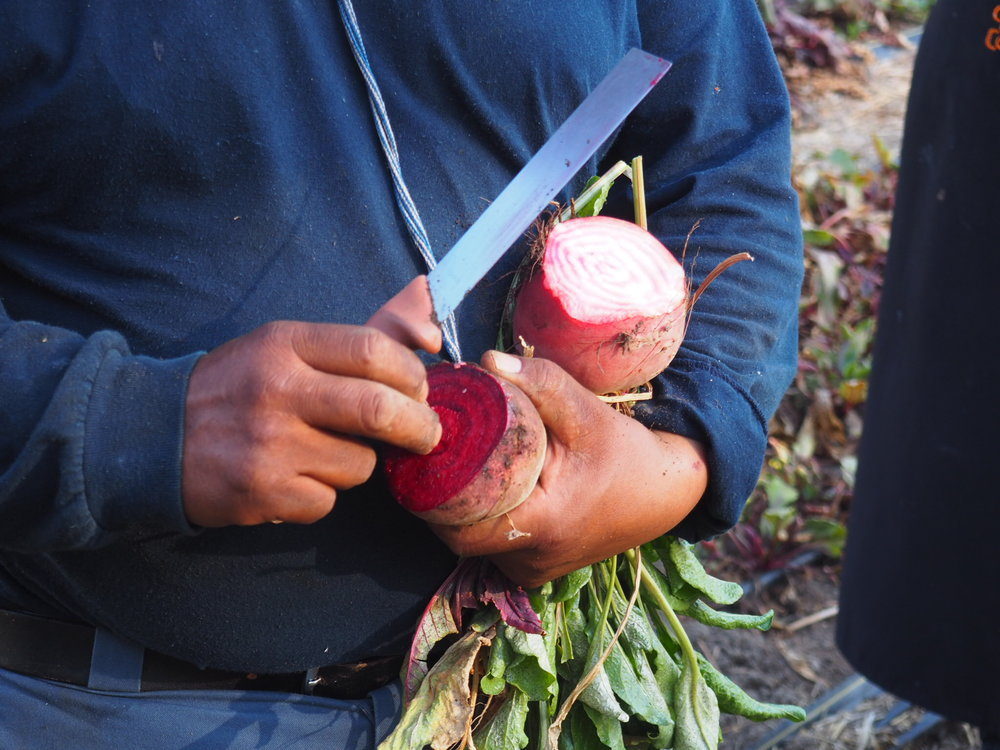 Salvador and some gorgeous beets. Photo by Jackie Bryant.