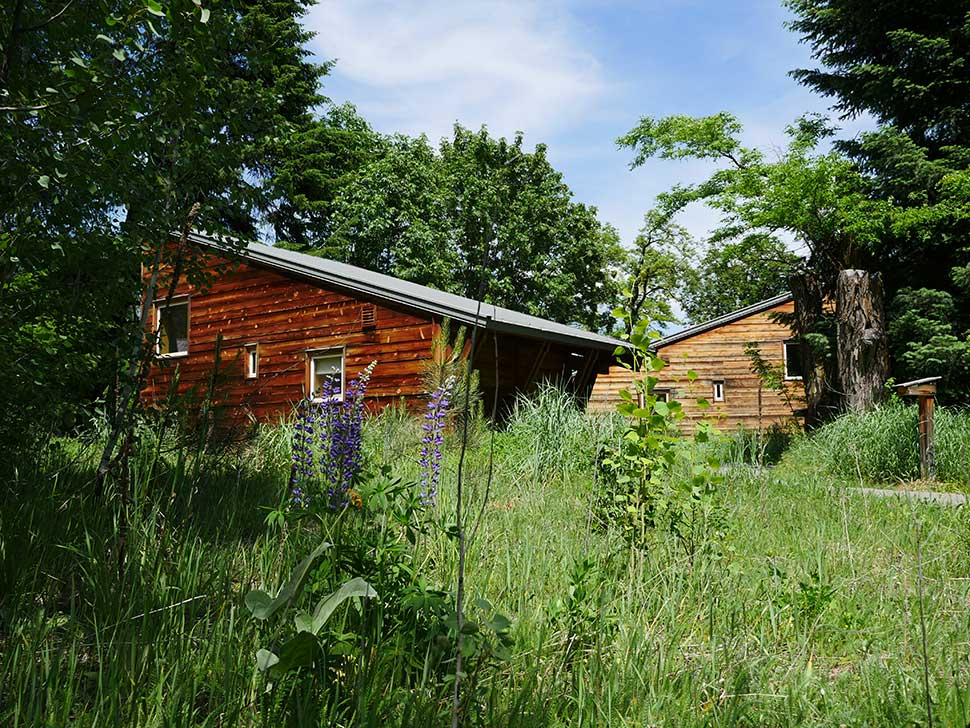 Lupin-Cabins1.jpg