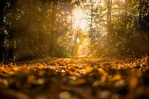 autumn2018.jpg