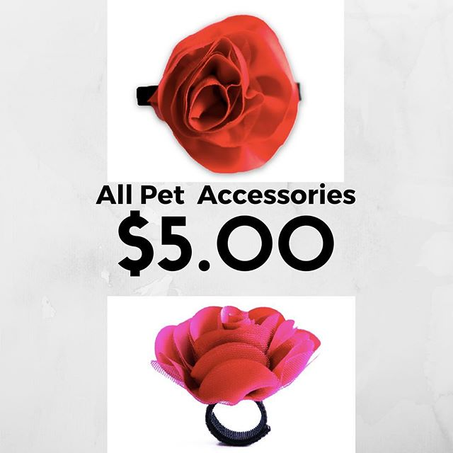 All pet accessories (including these adorable pet collar accessories!) are on sale for $5.00!