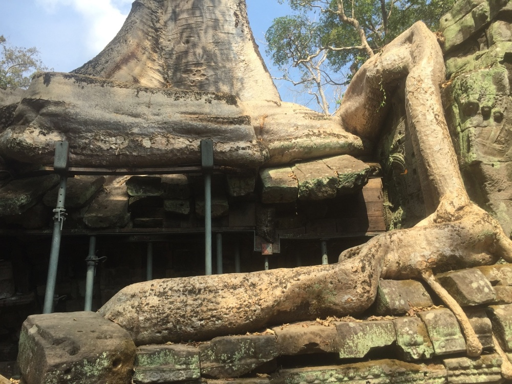 The roots of a tree intertwined with the structure of the temple