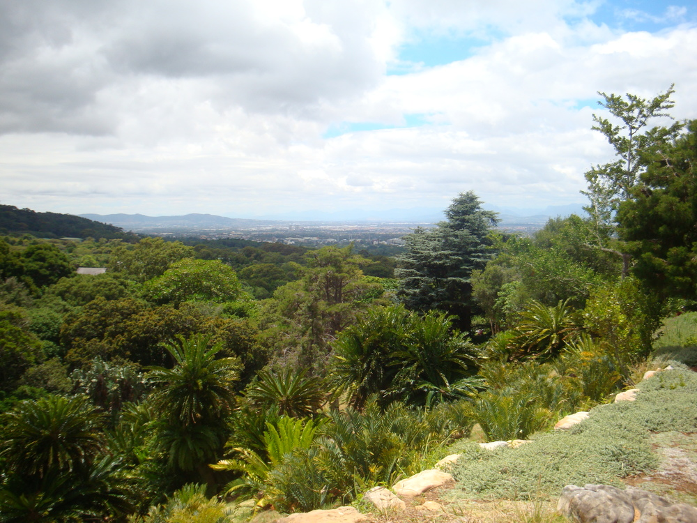 4. Admire the fauna and flora of Kirstenbosch Botanical Gardens