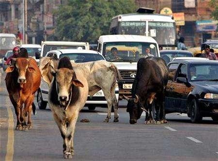 Cows-on-Indian-roads.jpg