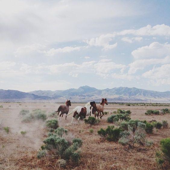 Horses running in open field
