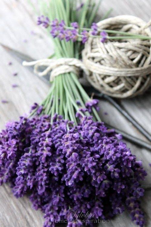 Lavender sprigs