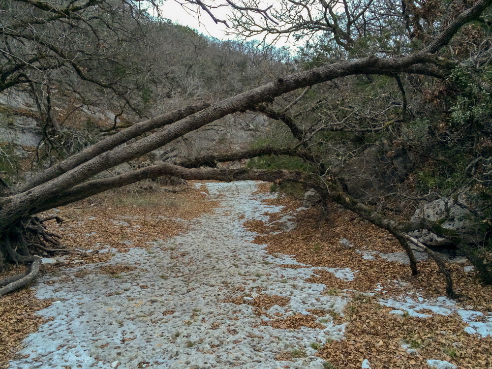 A fallen tree hangs over the path along West Trail