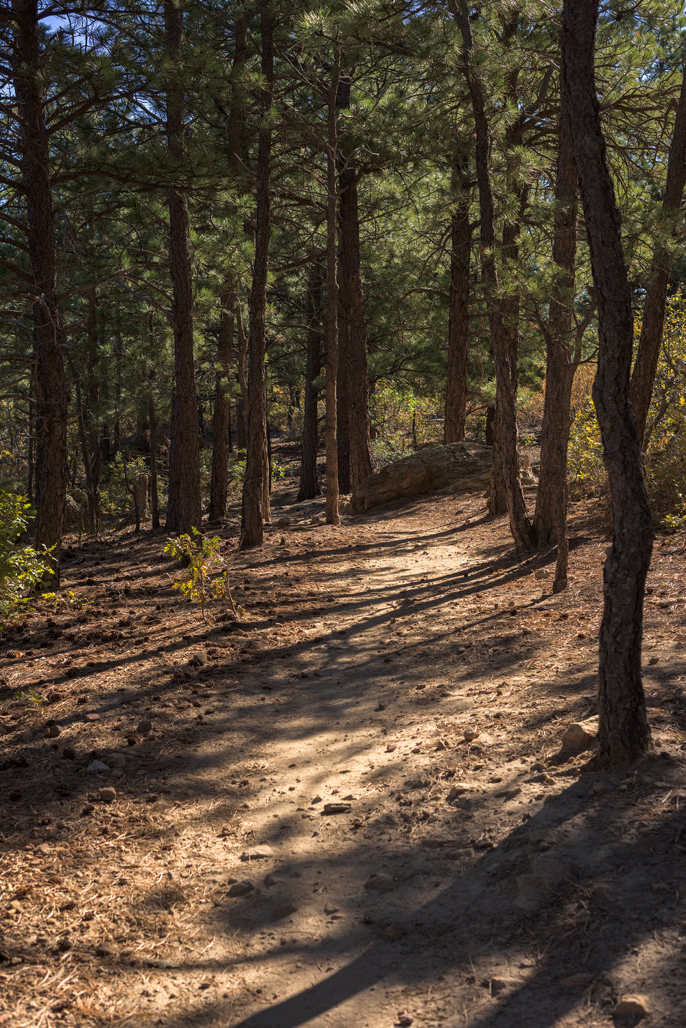 BTP_Ute_Valley_Park_Scrub_Oak_Path.jpg