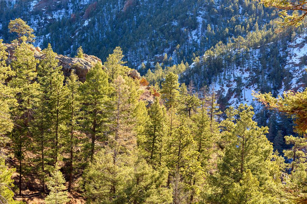BTP_NCC_Upper_Columbine_Trail_5.jpg