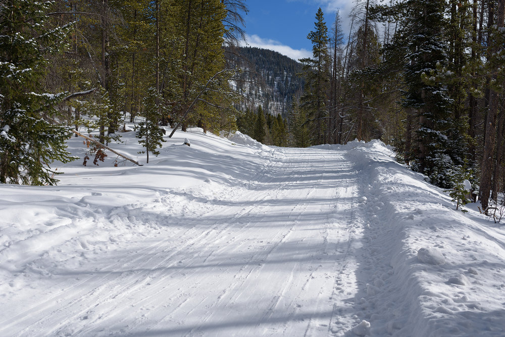 Lots of XC skiing traffic on this trail