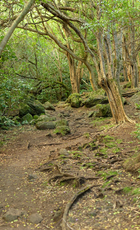 Hiking Kuli'ou'ou Ridge Trail   Ryan Stikeleather Break Trail