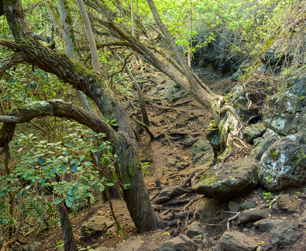 BTP_Kuliouou_Ridge_Trail-72.jpg