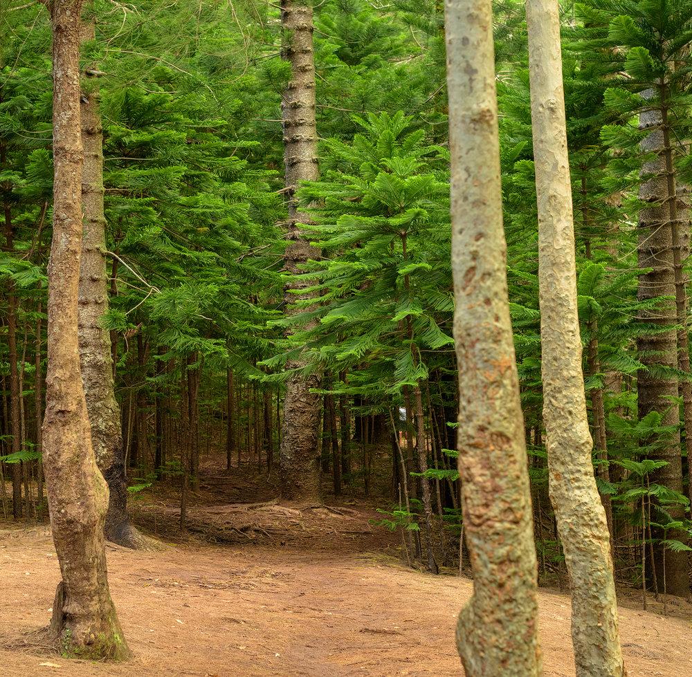 BTP_Kuliouou_Ridge_Trail-83.jpg