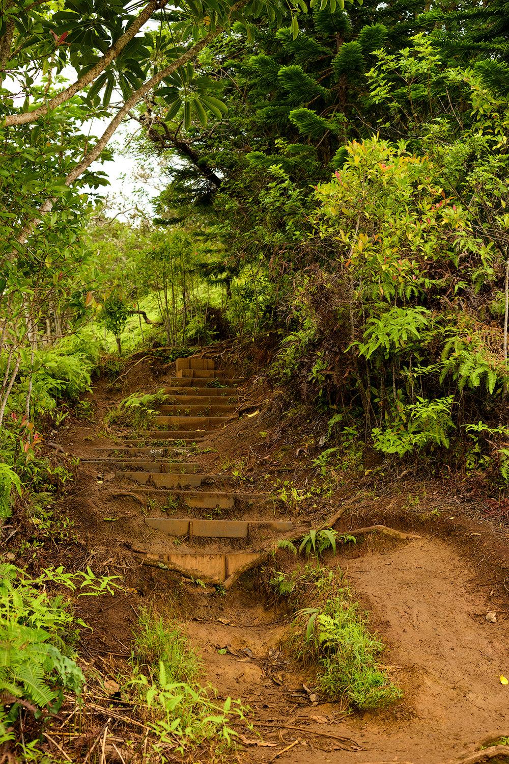 BTP_Kuliouou_Ridge_Trail-96.jpg