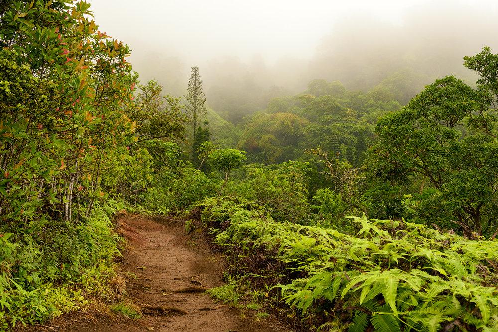 BTP_Kuliouou_Ridge_Trail-104.jpg